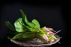 Bunch of fresh spinach Stock Photography