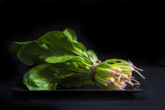 Bunch of fresh spinach Royalty Free Stock Images