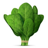 Bunch of fresh spinach close up Royalty Free Stock Photos