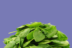 Bunch of fresh spinach leaves Stock Photography