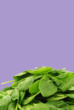 Bunch of fresh spinach leaves Royalty Free Stock Photo