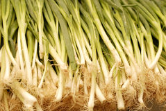 Bunch of fresh spring onions Stock Photo