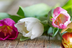 Bunch of fresh spring  tulips on old vintage wooden board Stock Photography