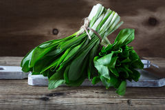Bunch of fresh spring wild garlic Royalty Free Stock Images