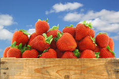 Bunch of fresh strawberries in a wooden crate Royalty Free Stock Photos