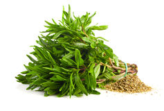 Bunch of fresh thyme and dry seasoning thyme. Stock Image