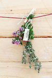 Bunch of fresh thyme with name label Stock Images