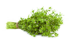Bunch of fresh Thyme /   on white Royalty Free Stock Images