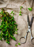 Bunch of a fresh thyme Royalty Free Stock Photo