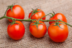 Bunch of fresh tomatoes, on sacking. Bunch of fresh tomatoes on sacking royalty free stock photos