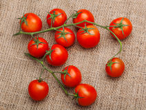 Bunch of fresh tomatoes on sacking. Bunch of fresh tomatoes  sacking Royalty Free Stock Photography