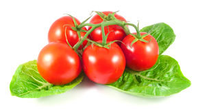 Bunch of fresh tomatoes with salad leaves Stock Photo