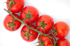 Bunch of fresh tomatoes with water drops Stock Image