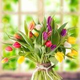 Bunch of fresh tulips Stock Photos