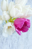 A bunch of fresh tulips flowers on a white wooden background Stock Photo