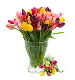 Bunch of fresh tulips in vase Stock Photos