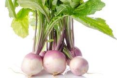 Bunch of fresh turnips Stock Image