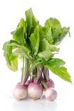 Bunch of fresh turnips Stock Photography