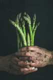 Bunch of fresh uncooked seasonal asparagus in dirty man`s hands royalty free stock images