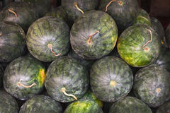 Bunch of fresh watermelons Royalty Free Stock Photo