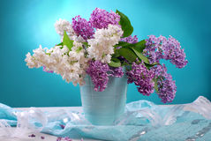 Bunch of fresh white and purple lilac Stock Image