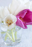 A bunch of fresh white and violet tulips flowers on a white wood Stock Photos