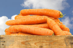Bunch of fresh winter carrots Stock Photography