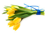 Bunch of fresh yellow tulips  on white Stock Photos