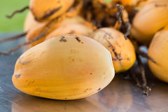 Bunch of fresh yellow young coconut for refreshing drinks Stock Image