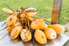 Bunch of fresh yellow young coconut for refreshing drinks Stock Images