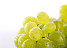 Bunch freshing grape Royalty Free Stock Images