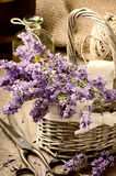 Bunch of freshly cut lavender Stock Image