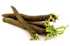 Bunch of freshly harvested black salsify royalty free stock photography