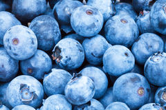 Bunch of freshly picked blueberries - close up shot Royalty Free Stock Image