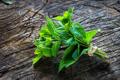 Bunch of freshly picked Mentha Stock Images