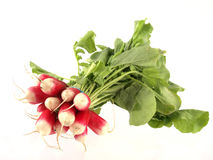 Bunch of freshly picked radish Stock Images