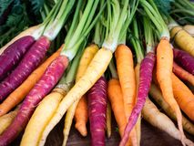 Bunch of freshly picked rainbow carrots with tops stacked waiting for dinner preparation royalty free stock image