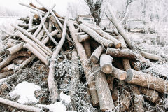Bunch of frosty firewood in yard Stock Images