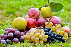 Bunch of fruits outdoor Royalty Free Stock Photos