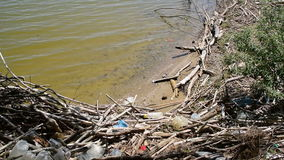 A bunch of garbage that the river washed at the shore stock video footage