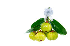 Bunch of garcinia cambogia fresh fruit, isolated on white. Fruit. Bunch of garcinia cambogia fresh fruit with ribbon, isolated on white. Garcinia atroviridis is Royalty Free Stock Images