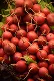 A bunch of garden radish Stock Photos