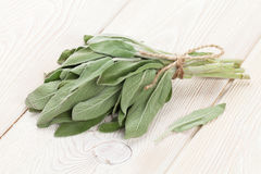 Bunch of garden sage herb Stock Photography