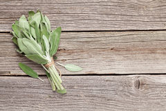 Bunch of garden sage herb Stock Image