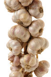 Bunch of garlic Royalty Free Stock Images