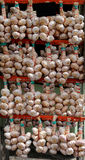 Bunch of garlic. Bunchs of garlic with price tag stock image