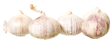 Bunch of Garlic Royalty Free Stock Photo