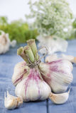 Bunch of Garlic. Fresh Garlic with Dill-Flower on blue wood Table stock photography