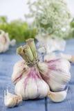 Bunch of Garlic Stock Photography