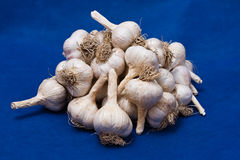 Bunch of garlic. A bunch of garlic on a blue background Royalty Free Stock Image
